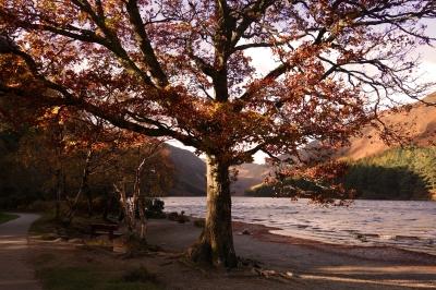 dsc08590-master-tree