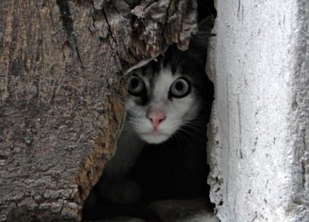 hilltown-cat-2-apricale-097