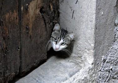 hilltown-cat-2-italy